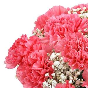 Clare Florist Perfectly Pretty Pink Carnations Fresh Flower Bouquet £14.99  (Prime) / £19.74 non Prime) at Amazon