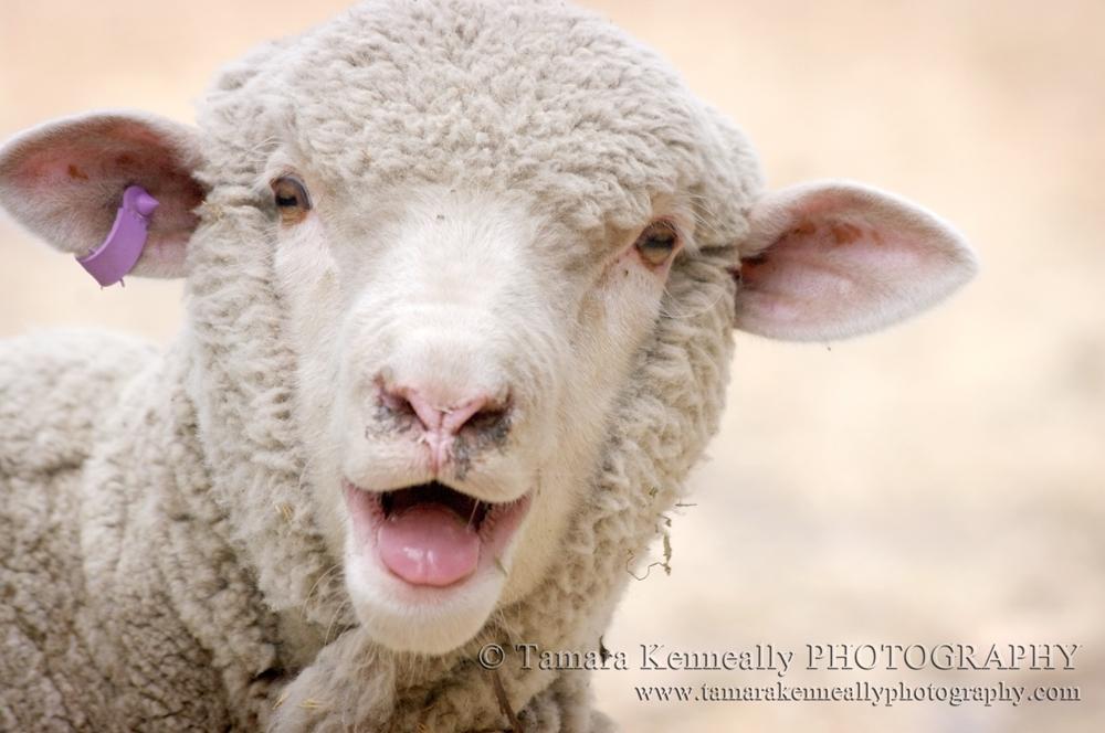 Lamb leg joint £4.97/kg @ Asda in-store
