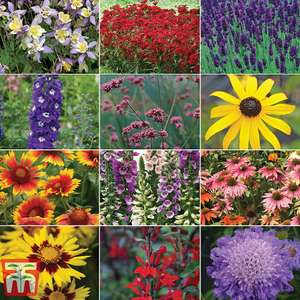 72 Perennial Plug Plants For £1.99 + £4.95 delivery @ Thompson & Morgan