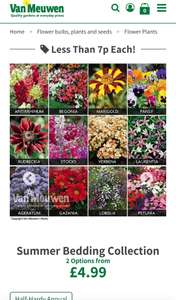 72 bedding plants from Van  Meuwen for £4.99 or 144 bedding plants for £8.97 + £3.95 p&p @ Van Meuwan