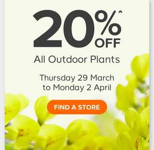 B&Q Easter plant offer - 20% off all outdoor plants  from Thursday 29th March