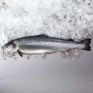 Whole Salmon reduced to clear at Tesco fish counter £2.75 per kg @ Tesco superstore Norwich