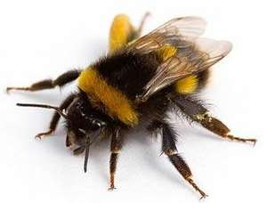 Help the Bees please! - free packet of seeds from the Soil Association