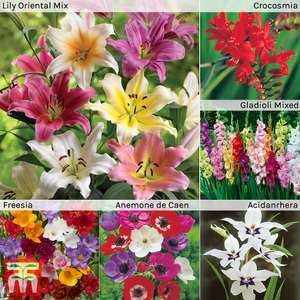 100 summer bulbs for £5 or 200 for £9. £4.95 delivery @ Thompson and Morgan