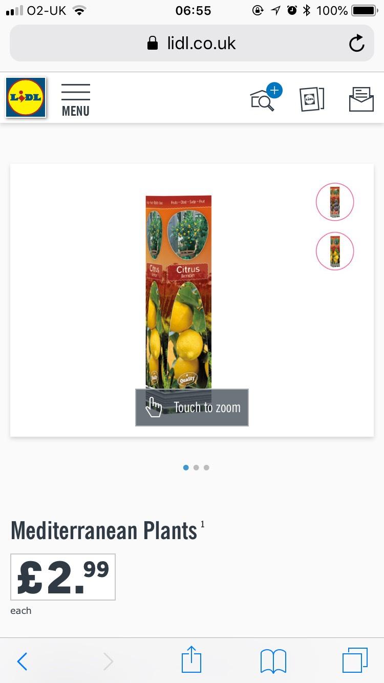 Mediterranean Plants -  Olive, Fig and Citrus £2.99 Lidl
