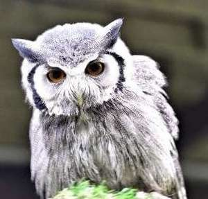 Family Days Out Offers at Buyagift eg Entry to the Scottish Owl Centre for Two Adults was £29 now £15 + Kids Go Free (more in OP)