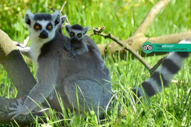 Kirkley Hall Zoological Gardens Weekend Family Day Pass £10 usually £21.95 @ wowcher / Kirkley Hall zoo