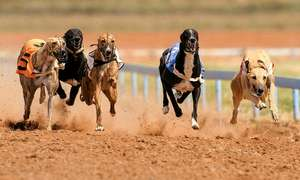 Night out at the dogs in Manchester - Two (2) tickets to greyhound racing with programme, choice of drink and burger £10 via Groupon