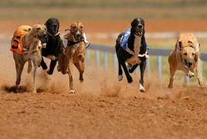 Dog Racing, Burger, Drink, Tote Win Bet & Programme for 2 people NOW only £8.00 at Perry Barr Stadium via LivingSocial