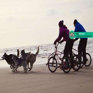 2 hour husky sledding experience for 2 now £49 @ Living Social