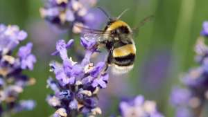 Make a donation for a Bee Saver Kit and help out our busy little Bees@ Friends of the Earth (Suggested minimum donation is £5 but you can give £1)