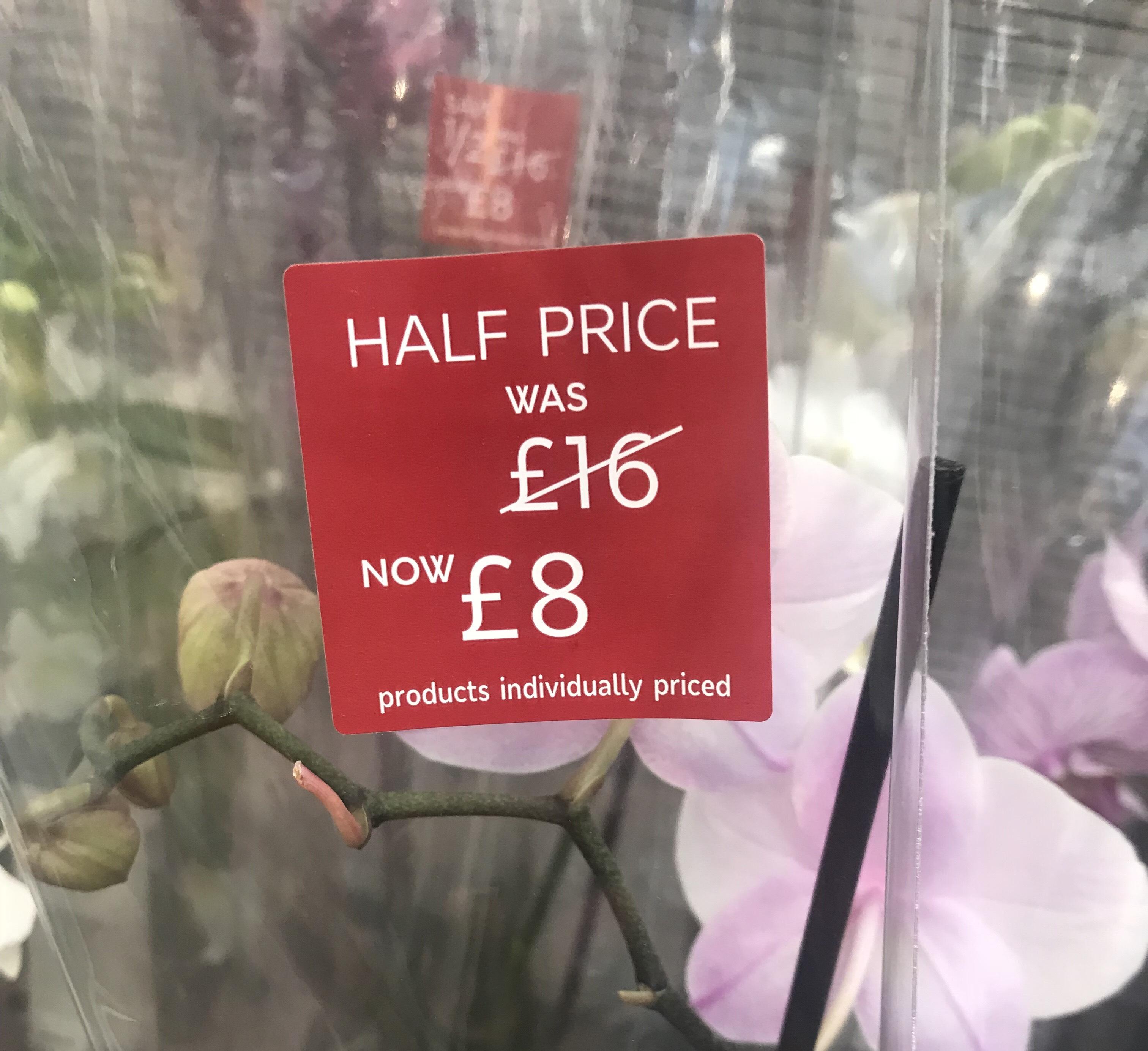 Orchid in ceramic pot £8 in M&S