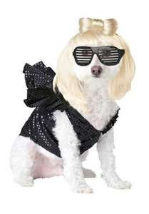 Lady Gaga dog costume - EBay Simply Home Entertainment store for £10.75