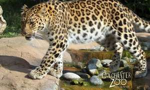 Colchester Zoo Entry Valid 4 Jul-20 Sep 2018 - £18.50 / £17.58 with code @ Groupon