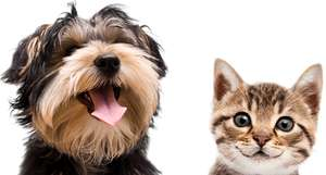 Free pet toy bundle and £30 Argos gift voucher - With Argos pet insurance quote
