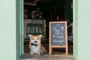 Dogs get 2-for-1 at Ben's Canteen in Earlsfield with Meerkat Meals