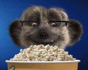 Meerkat movies and meals for £1.01 with 1 day travel insurance policy @ Compare the market