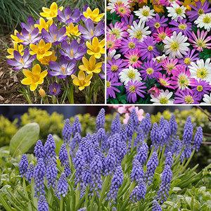 Plant o Mat Allium Planting Kit (19 bulbs inc) + 60 Naturalising Bulb Mix £6.98 w/code @ YouGarden (£5.99 P&P per order) - can buy multiples