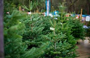 10% OFF Real Christmas Trees @LongAcres Garden Centres