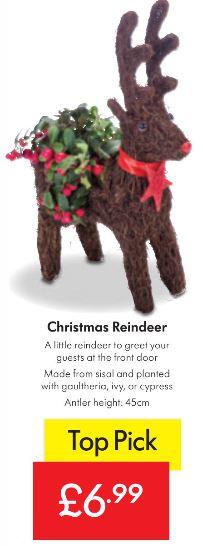 Christmas Reindeer Planter £6.99 - LIDL Dec 6th