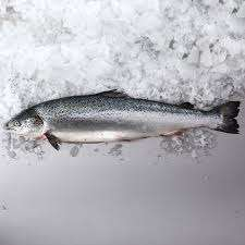 Fresh whole Salmon £5.00 per kilo from Morrisons starting on Monday 10th December 2018