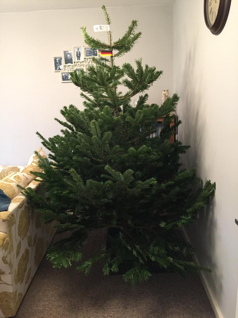 Christmas tree £10 instore @ Poundland Nottingham Daleside