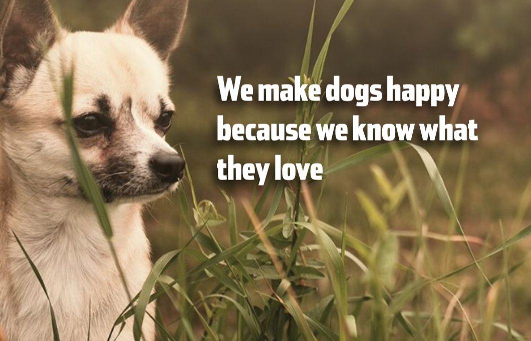 Free Dog Food Samples from Happy Dog UK