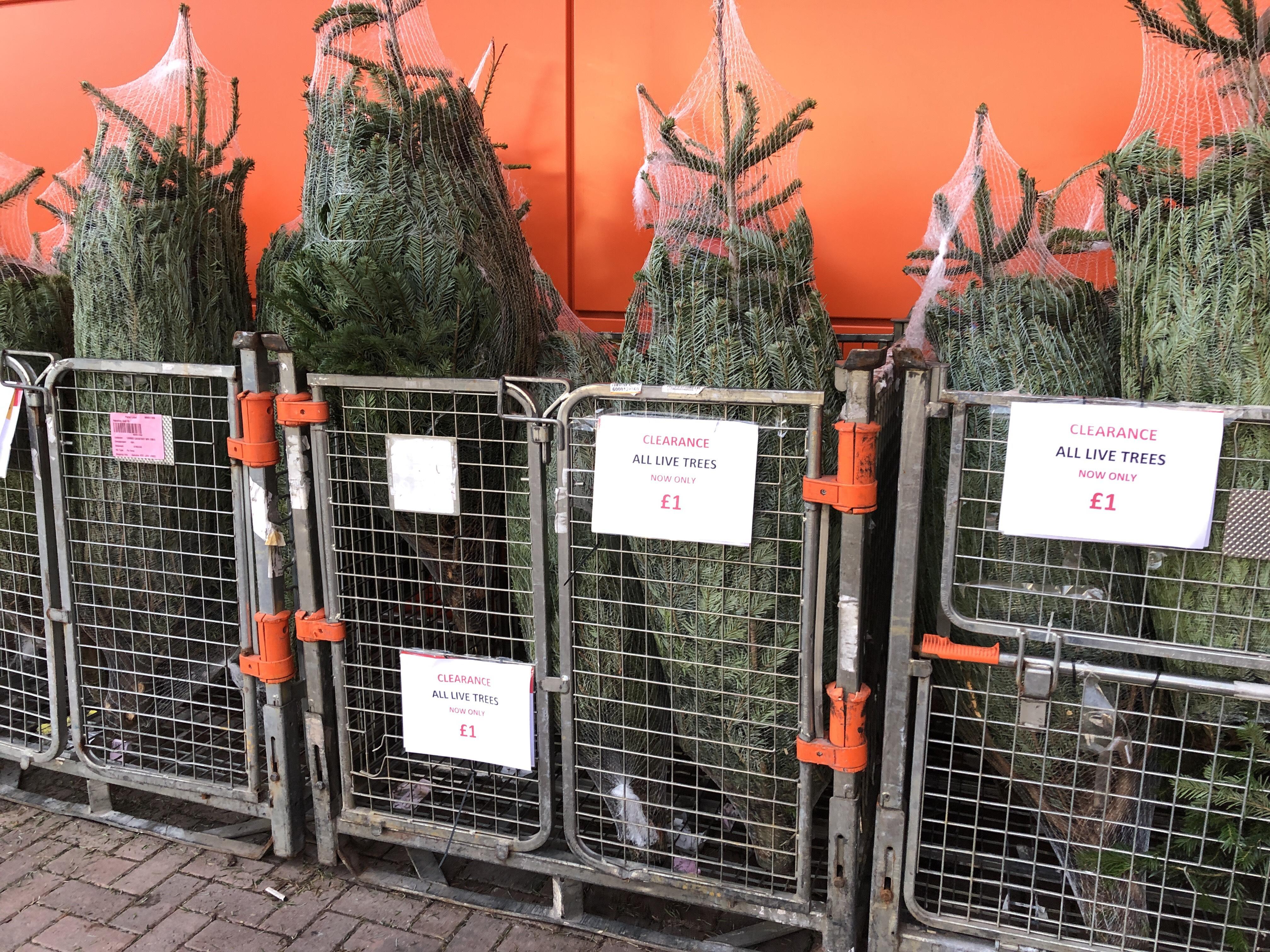 Christmas tree - £1 instore @ B&Q