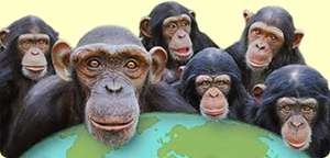 Half Price entry for Monkey World for SP, DT or BH postcodes