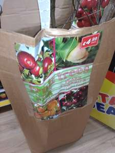 Fruit trees (apple, cherry, pear, plum), £4.99 in-store in Bargain Buys / Poundstretcher