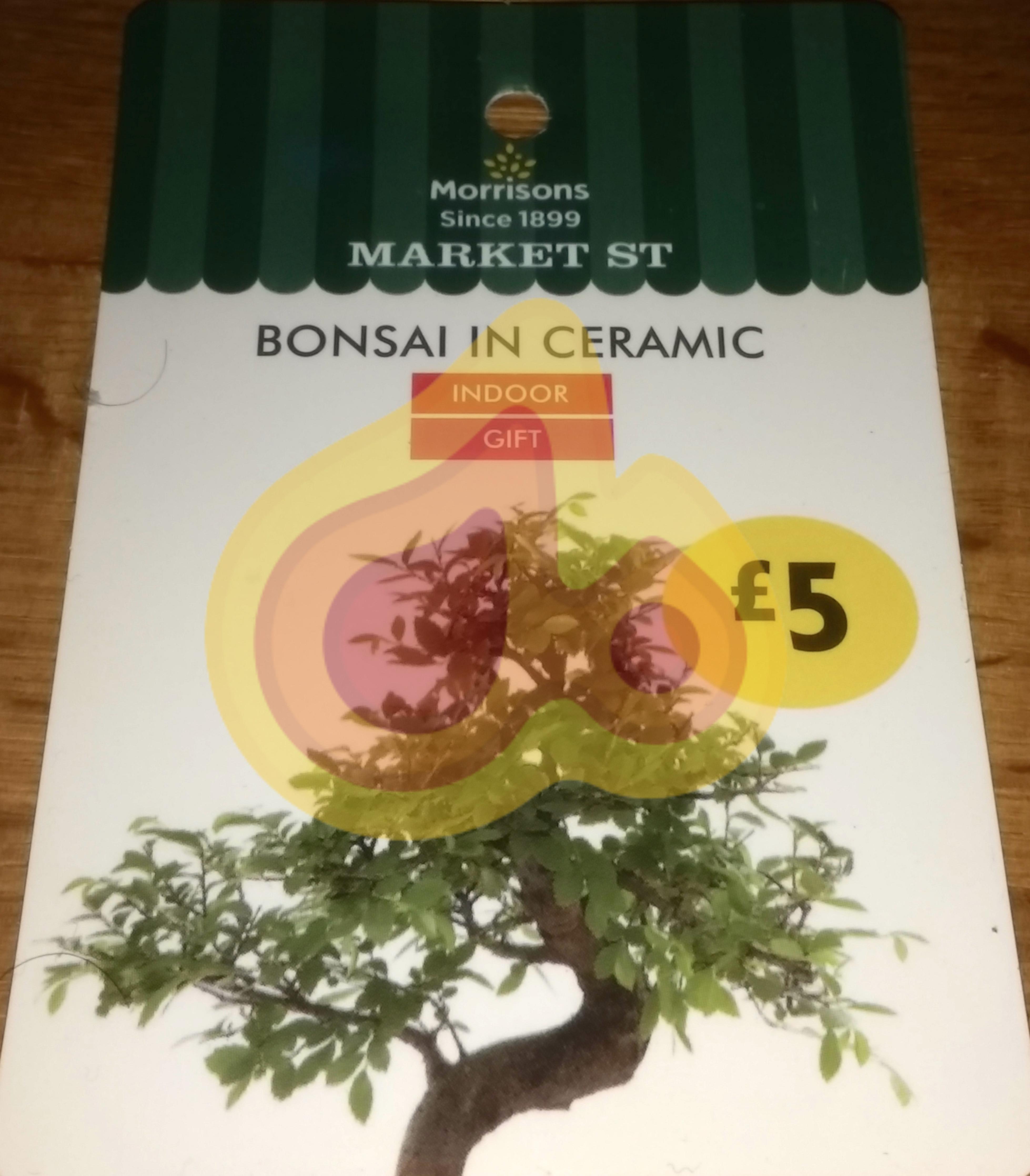 Bonsai Tree in Black or White Ceramic Pot £5 @ Morrisons instore