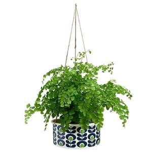 Upto 55% Off Orla Kiely Clearance at Temptation Gifts Inc. Orla Kiely Large Boxed Hanging Plant Pot (was £24) Now £10.78 / £14.77 delivered
