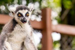 Family Entry Ticket to Safari Zoo, Ulverston at Living Social for £24