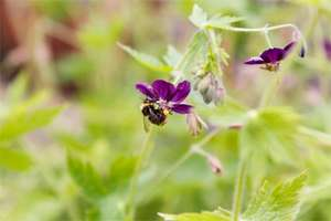 FREE Bee-Friendly, Wildflowers Seeds Pack @ 38 Degrees [Save the Bees]