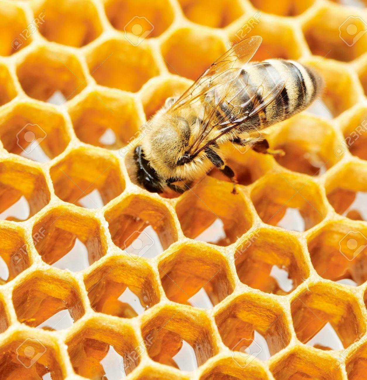 Honeycomb in Acacia Honey 340g - £4.35 in ALDI