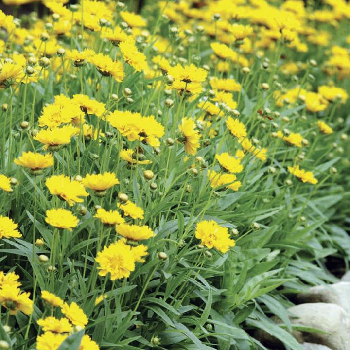 54 Summer Bedding Super Size Plug Plants £14.99 + £4.99 P&P @ Sutton Seeds