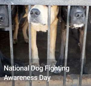 FREE to join (& report) the RSPCA's campaign to end dog fighting