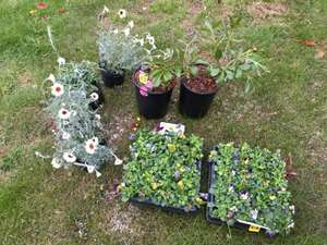 Garden Plants - 1p Instore at Wickes (Wakefield)