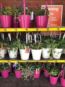 20% off all outdoor plants for Easter weekend starts today for club members and tomorrow for everyone else until Monday 22nd @ B&Q