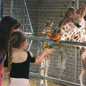 Chessington Animal Adoption, including £10 shop voucher and 2 Zoo Day tickets *Dates extremely limited* - £11.99