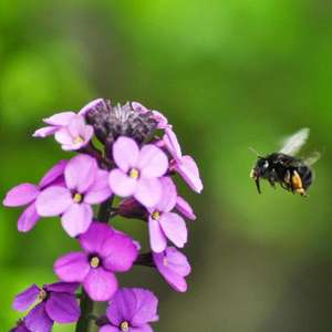 Bee Saver Kit, do your bit as World Bee Day Approaches £1 Donation @ Friends of the Earth and more