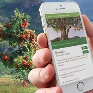 Tree Identifier App (Android/iOS) Free @ Woodland Trust
