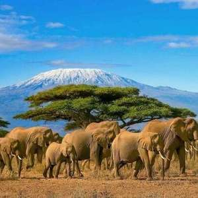 From Birmingham - Explore Africa; Flights to Kilimanjaro (ideal for Serengeti) + Open Jaw including Rwanda & Kenya @ KLM
