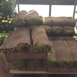 Free Turf instore @ Homebase Gateshead Team Valley store