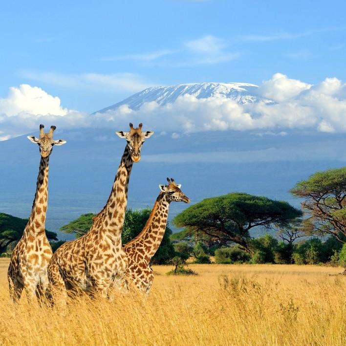 Direct return flight to Nairobi (Kenya) £317 (Including hold baggage / August - Oct departures / departing LHR / Kenya Airways) @ Skyscanner