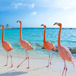 Direct return flight to Aruba (Dutch Caribbean Island) £299 (July departures / Departing London Gatwick) @ TUI