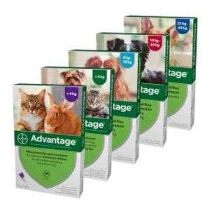 Advantage Spot On Flea treatment £9.01 + £2.99 delivery or free over £29 @ Pet Drugs Online