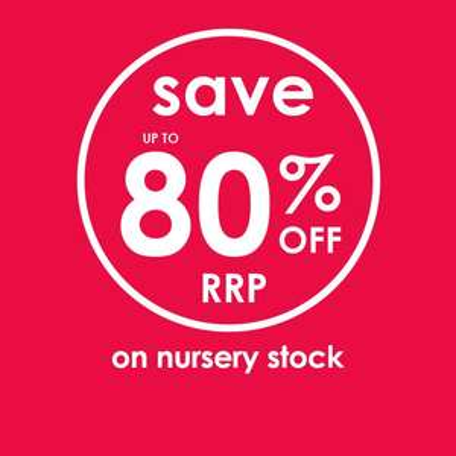 Nursery sale @ Hawkins Bazaar up to 80% off