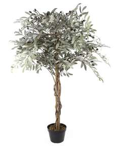 4ft Olive Trees £1.15 in Morrison's Whitefield