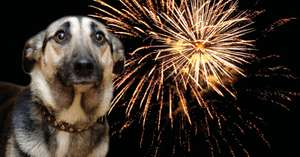FREE 'Fireworks and your pet' guide, Find out how to keep your pet calm and safe guide. By post or email @ PDSA